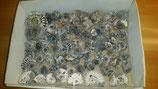 Ammoniten aus Buttenheim