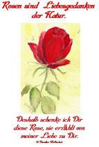 Rosen sind Liebesgedanken
