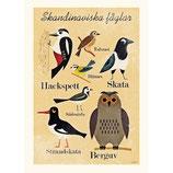 """OMM-Design Poster """"Skandinaviska fåglar"""" Ingela P Arrhenius"""