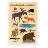 "OMM-Design Poster ""Skandinaviska däggdjur"" Ingela P Arrhenius"