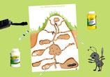 Pack d'activités - Les fourmis