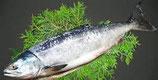 新巻鮭1尾(約3.3kg) (冷凍)