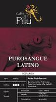 Purosangue Latino