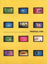 熱帯魚(洋画パンフレット)