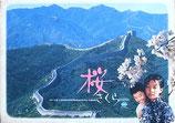 桜(中国映画プレスシート)