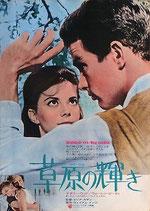 草原の輝き(アメリカ映画/プレスシート)