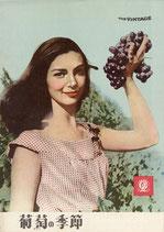 葡萄の季節(洋画パンフレット)