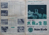 水鳥の生態(プレスシート/W・ディズニー映画)