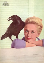 鳥(洋画パンフレット)