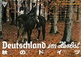 秋のドイツ(CINEMA23/チラシ洋画)