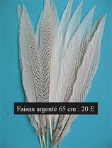 Plume de faisan argenté 65 - 70 cm