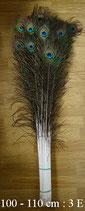 Plume de paon 100 - 110 cm