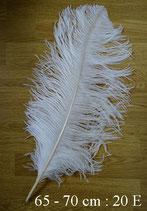 Plume d'autruche 65 - 70 cm
