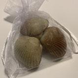 Une douzaine de sachets en organdi 3 Coques