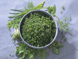 8 Gartenkräuter