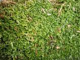 musgo para enredar plantas o decorar muy verde.