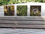 3-er-Set Bilder: Fotos auf Birkenmultiplex