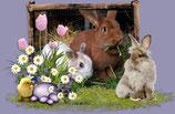 Appel vidéo du lapin de Pâques (francais)