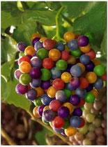 Wild & Crazy Grape Flavor Oil