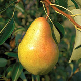 Bartlett Pear Fragrance Oil (Lebermuth Type)