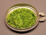 Grenailles Soyer N°47 vert