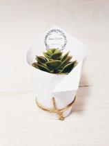 Mini plante grasse avec cache pot personnalisé