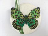 ivory Leinen Fascinator mit grünem Schmetterling auf Grashalmen
