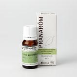 プラナロム ライム 10ml Citrus aurantifolia  ケモタイプ 精油 エッセンシャルオイル アロマオイル ケンソー 健草医学舎