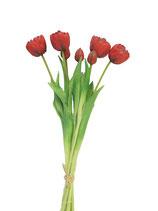 Bund Tulpen rot 44 cm