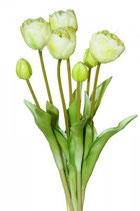 Bund Tulpen creme 44 cm