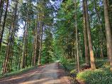 Waldspaziergang - Wähle im Drop-Down-Menü die Zeit aus