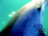 Cartolina II Cetaceansound-Italy.Org