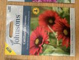 Gaillardia Firewheels. Shipped to UK only