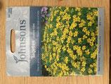 Tagetes Lemon Gem Shipped to UK only