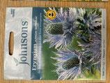 Eryngium alpinum Superbum Shipped to UK only