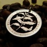 Ruanda Kaffeepflanze