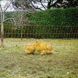 PoultryNet orange - Lieferung FREI HAUS