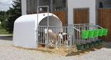 Großraumkälberhütte CalfHouse Premium 4/5 mit Umzäunung