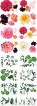 A1 Transfer Splendid Flora