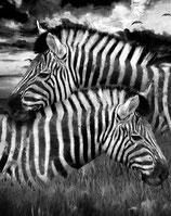 Zebras - Mint by Michelle decoupage