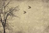 Flying birds - Mint by Michelle decoupage