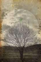 Sepia Tree - Mint by Michelle decoupage