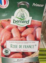 PDT ROSE DE FRANCE CHROMOS 25 PLANS