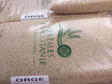 ORGE GRAINS