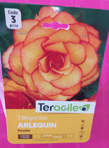 BULBES BEGONIAS DOUBLES PICOTEE ARLEQUIN