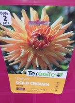 BULBES DAHLIA CACTUS GOLD CROWN
