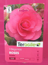 BULBES BEGONIAS X 3 DOUBLE ROSE