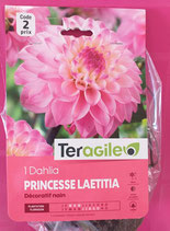 BULBES DAHLIA BUISSON PRINCESSE LAETITIA