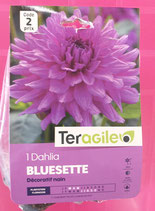 BULBES DAHLIA BUISSON BLUESETTE