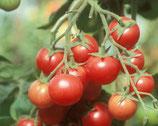 Cocktailparadeiser Brandywine Cherry